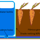 The simplest self watering container garden for vegetables or even trees