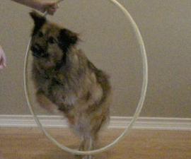 Teach your Dog to Jump Through a Hula Hoop