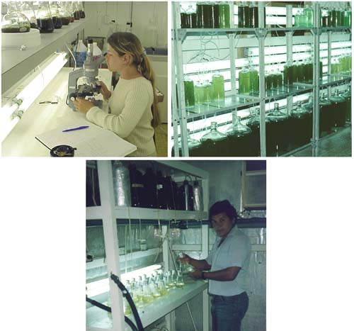 Picture of Maintenance of Stock and Starter Cultures