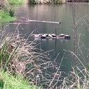 Habitat for Pond Turtles: Turtle Sofas!
