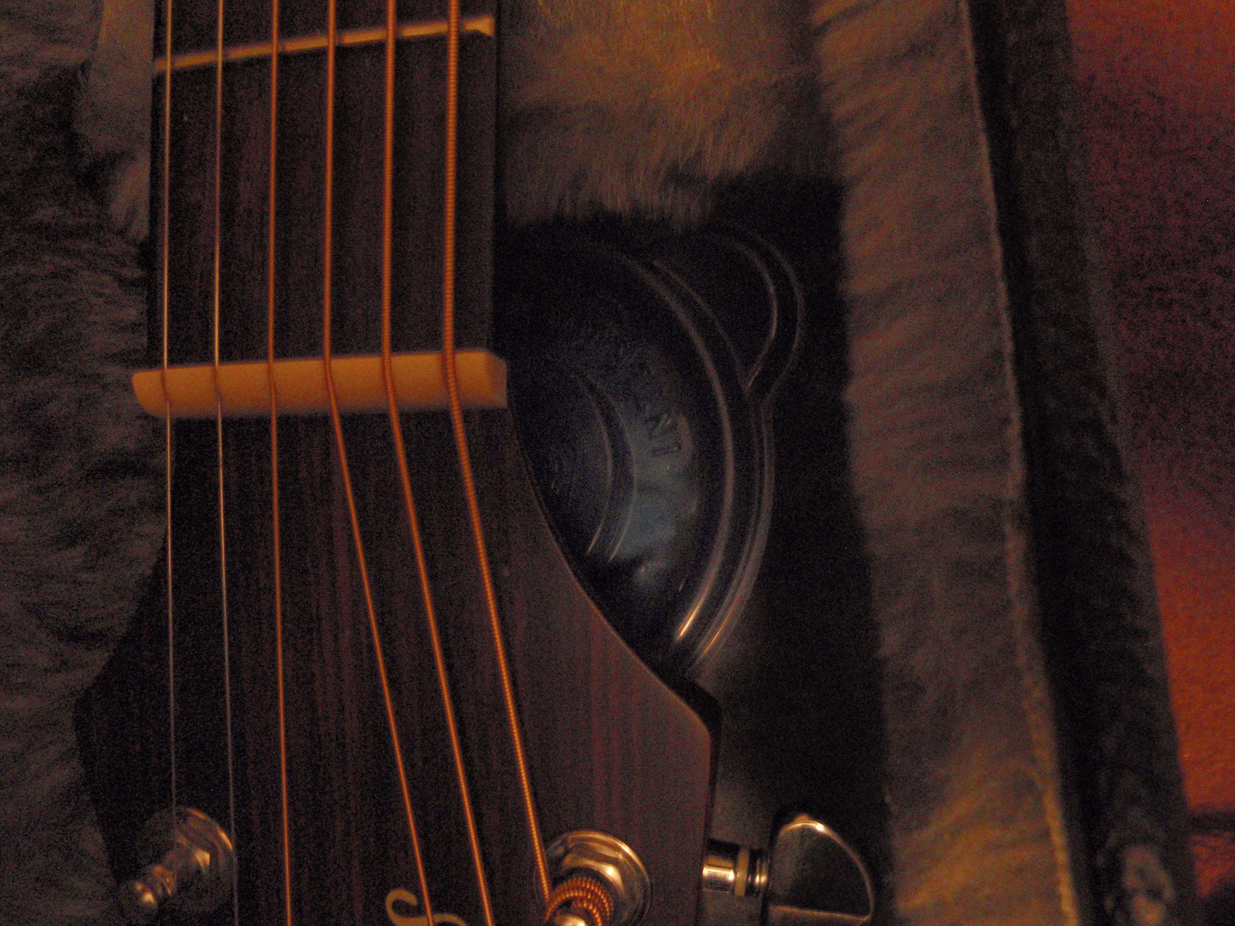 Picture of Homemade Guitar Humidifier