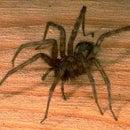 knex spider splatter sorry george