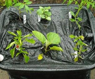 "TerraHydro Boxes, the Ultimate Self-Watering Vegetable Container System (aka TeraHydro Box, TetraHydro Box, DIY ""EarthBox"", or DIY ""Grow Box"")"