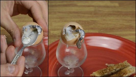 Snake Egg for Breakfast