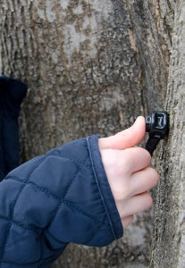 Tapping Trees