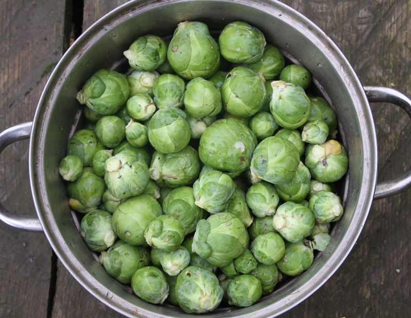 Picture of Steam the Sprouts