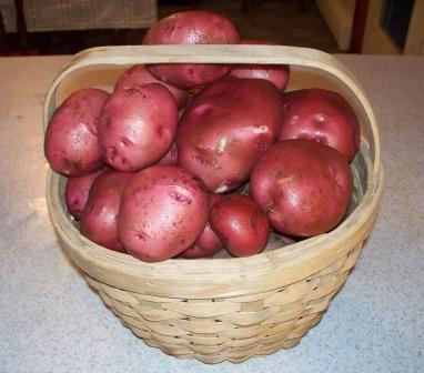 Picture of Potatoes,watering,feeding,planting,growing Climates,soil