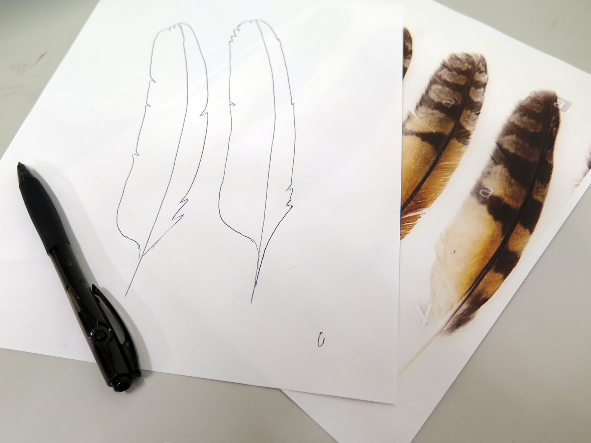 Picture of Make Feathers
