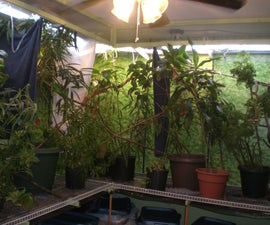 A Free Range Habitat for Meller's and other Large Chameleons