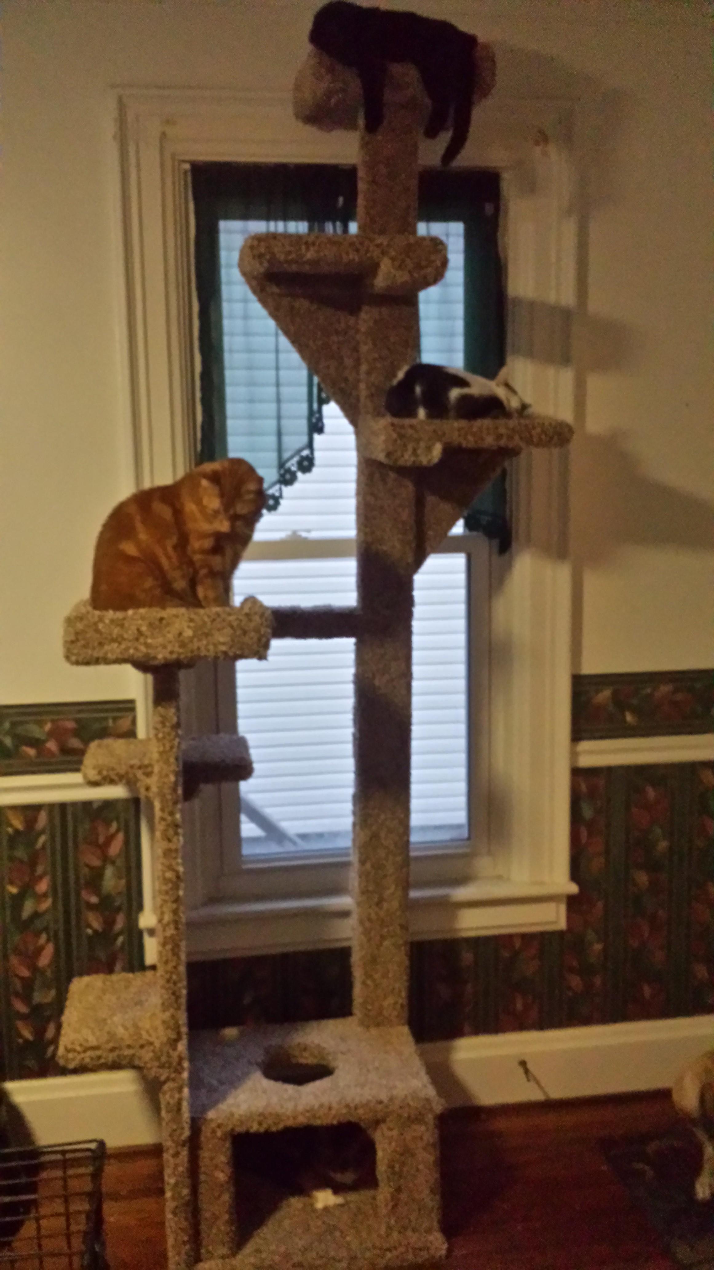 Picture of Cat Sequoia