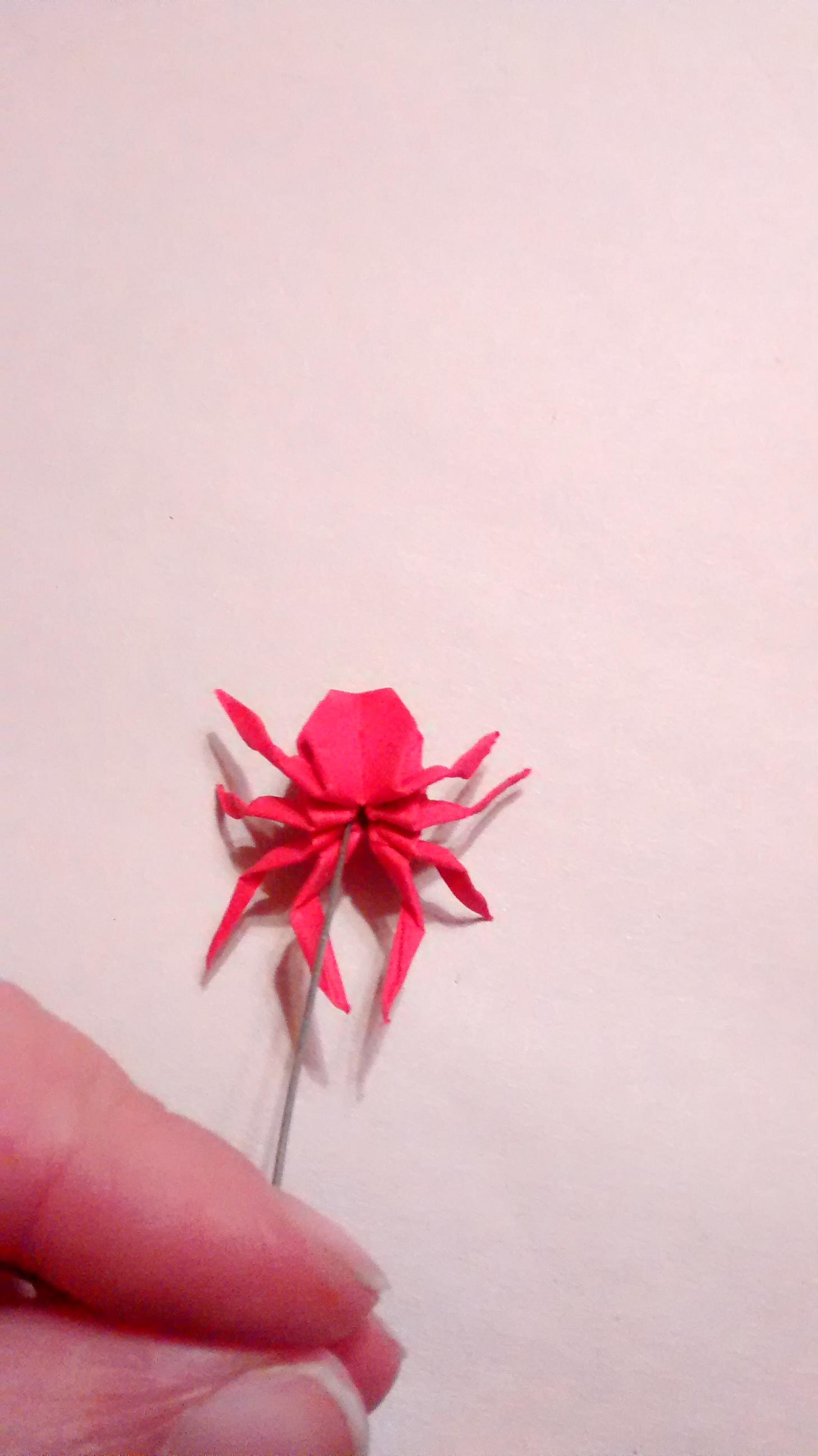Picture of Pinning Your Spider