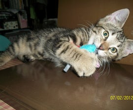 Catnip Mouse Cat Toy