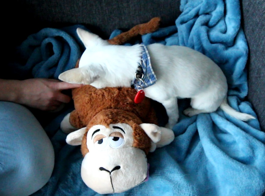 Picture of An RFID Dog Toy With Sounds