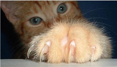 Cat Nail Trim