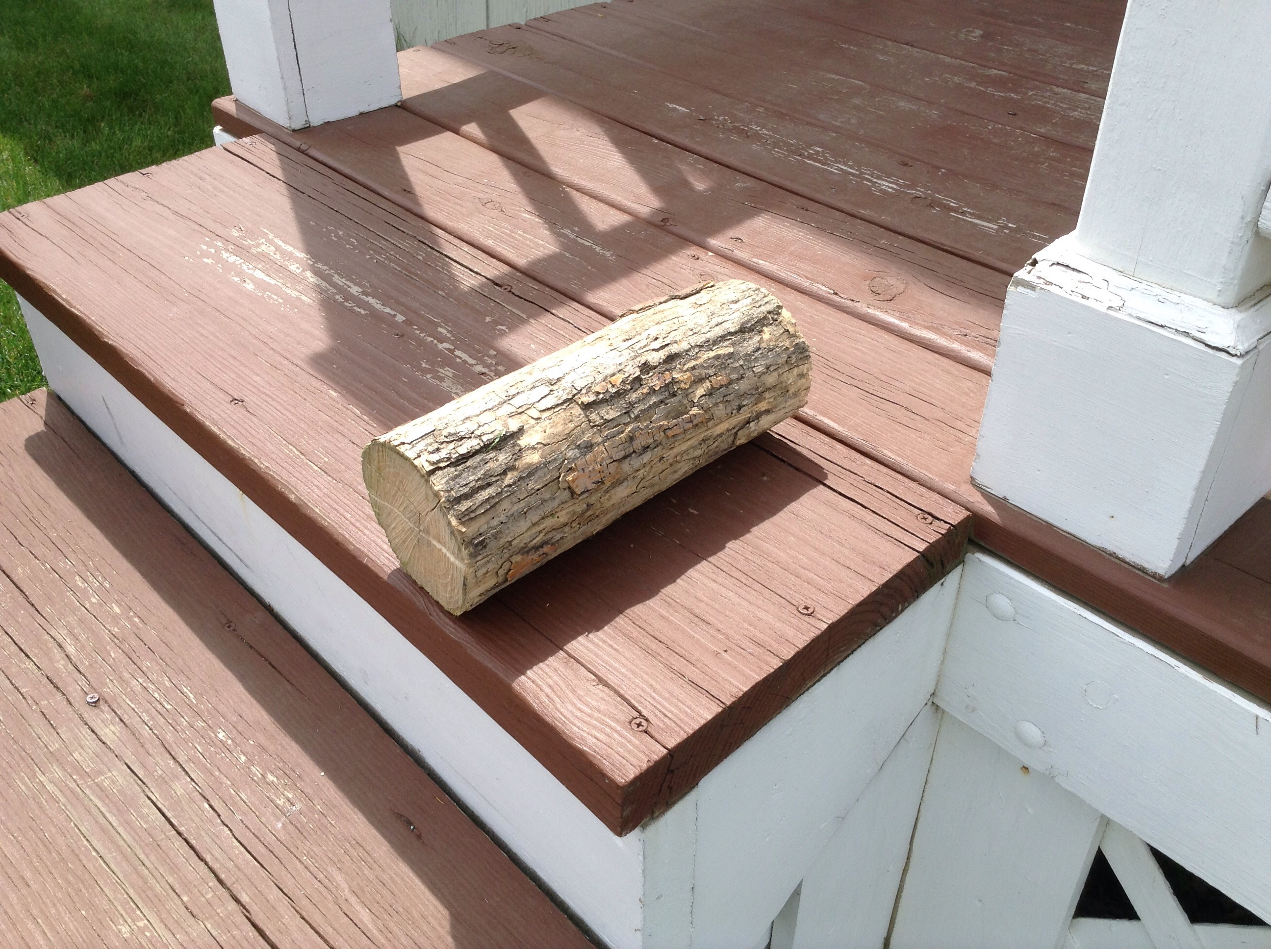 Picture of Hiding Place in a Log