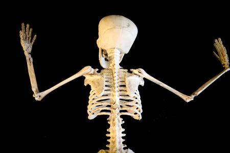 Skeleton Modification