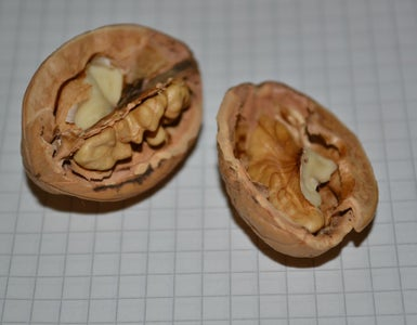 OPEN AND EMPTY THE WALNUT