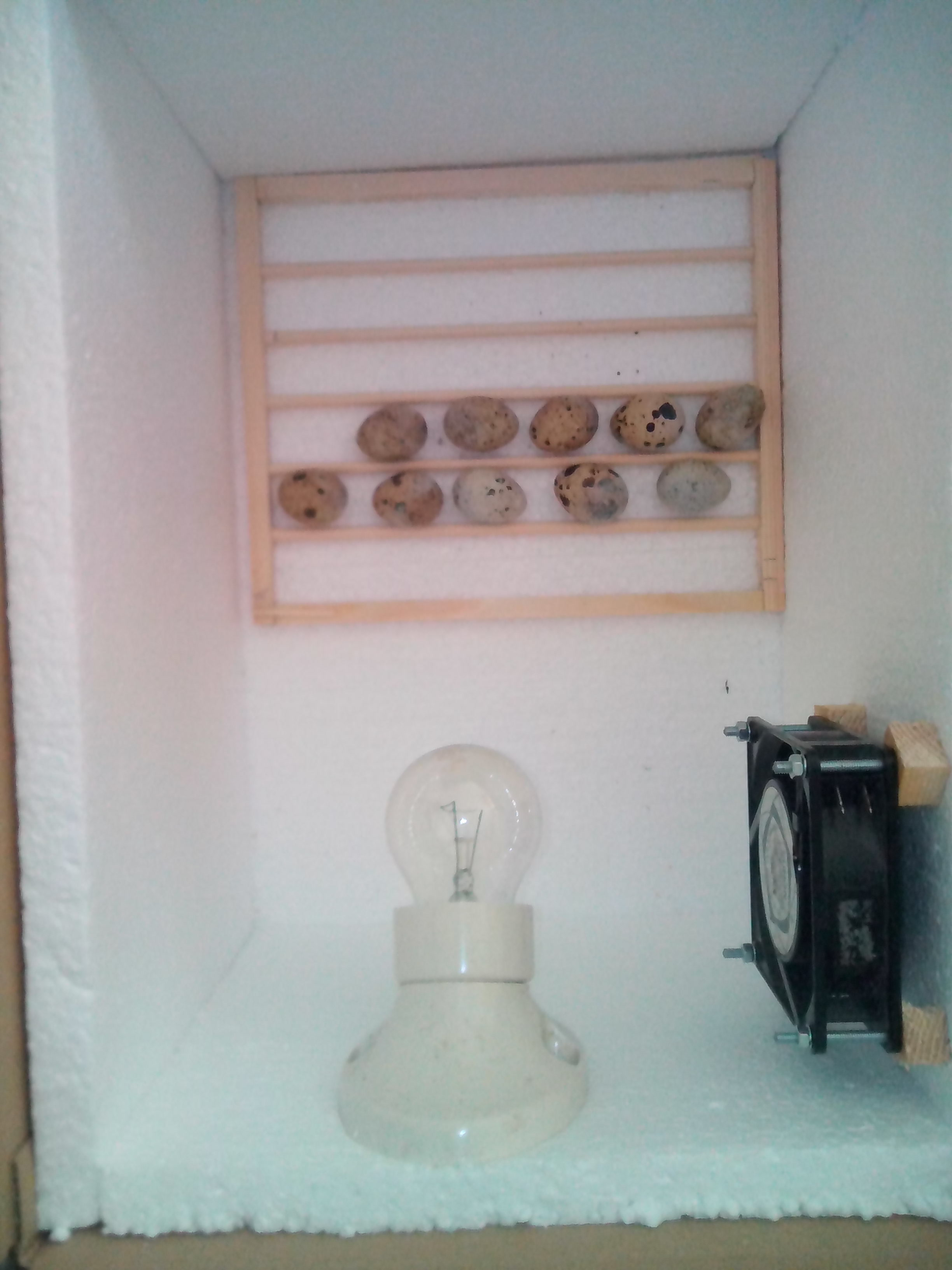 Picture of The Egg Rack and Turner