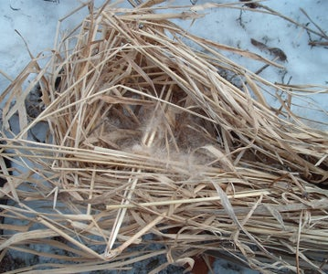 Make a Nest Out of Your Tinder
