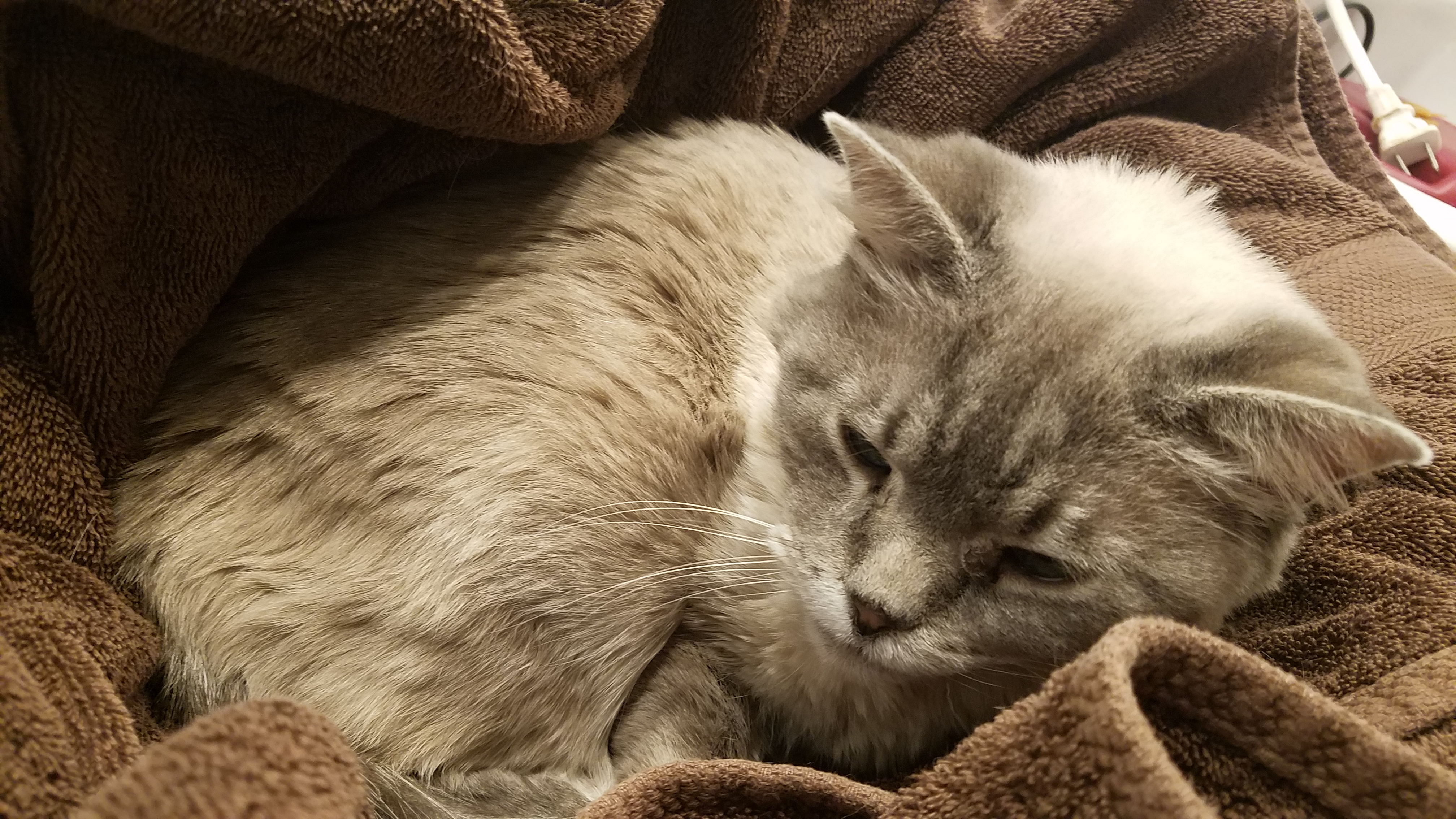 Picture of Wake Up the Cat