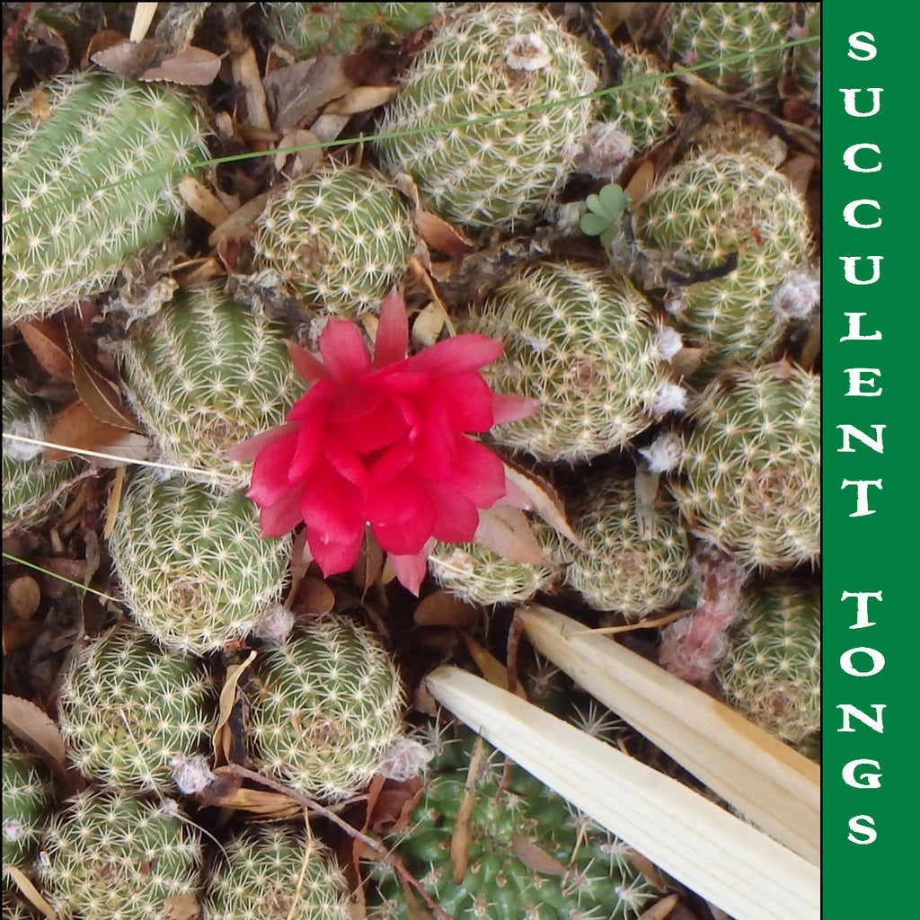 Succulent Tongs (Garden Tweezers): 5 Steps