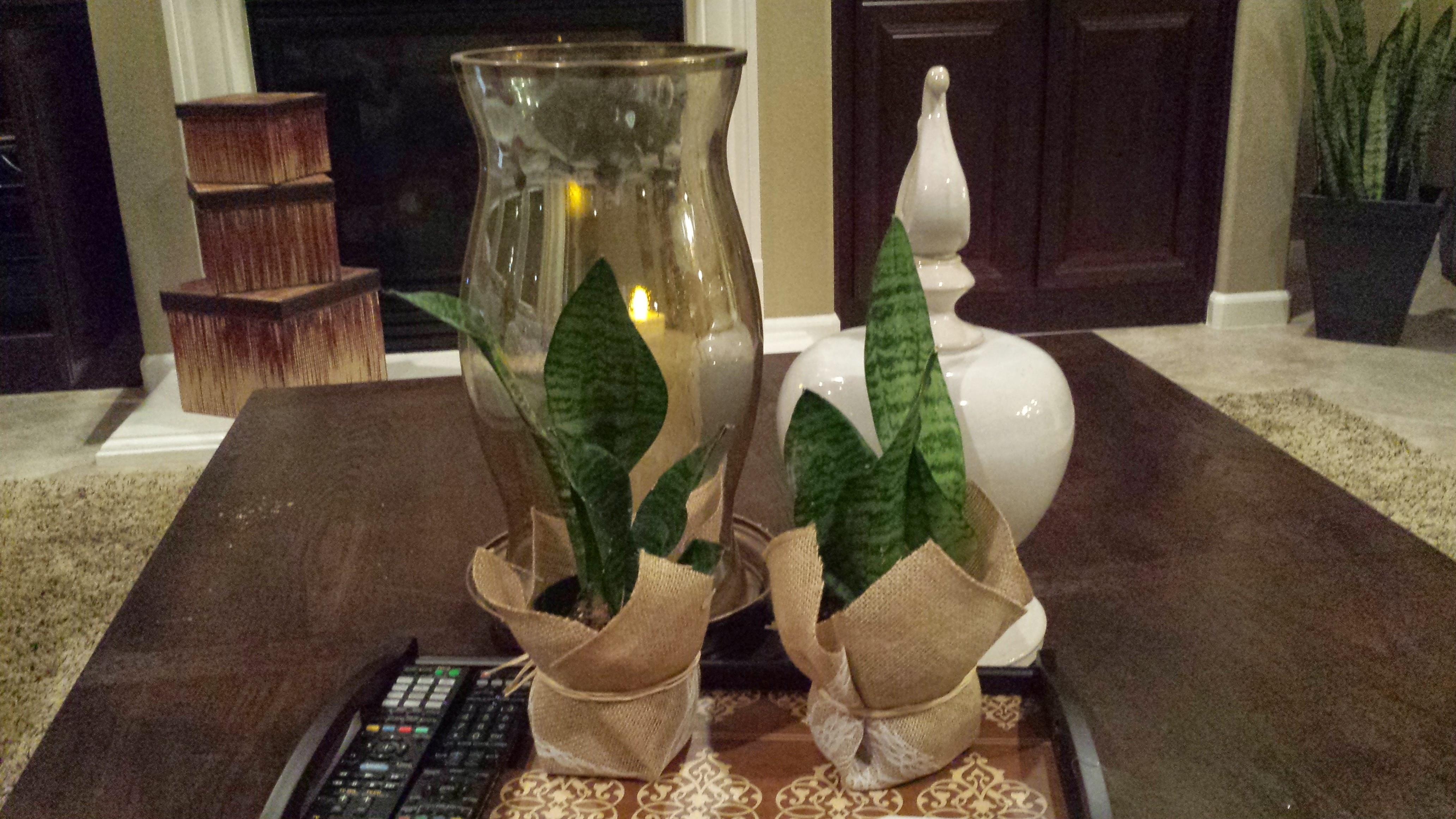 Picture of Holiday Plant Cover and Festive Candle Holder