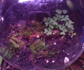 Mini Terrariums