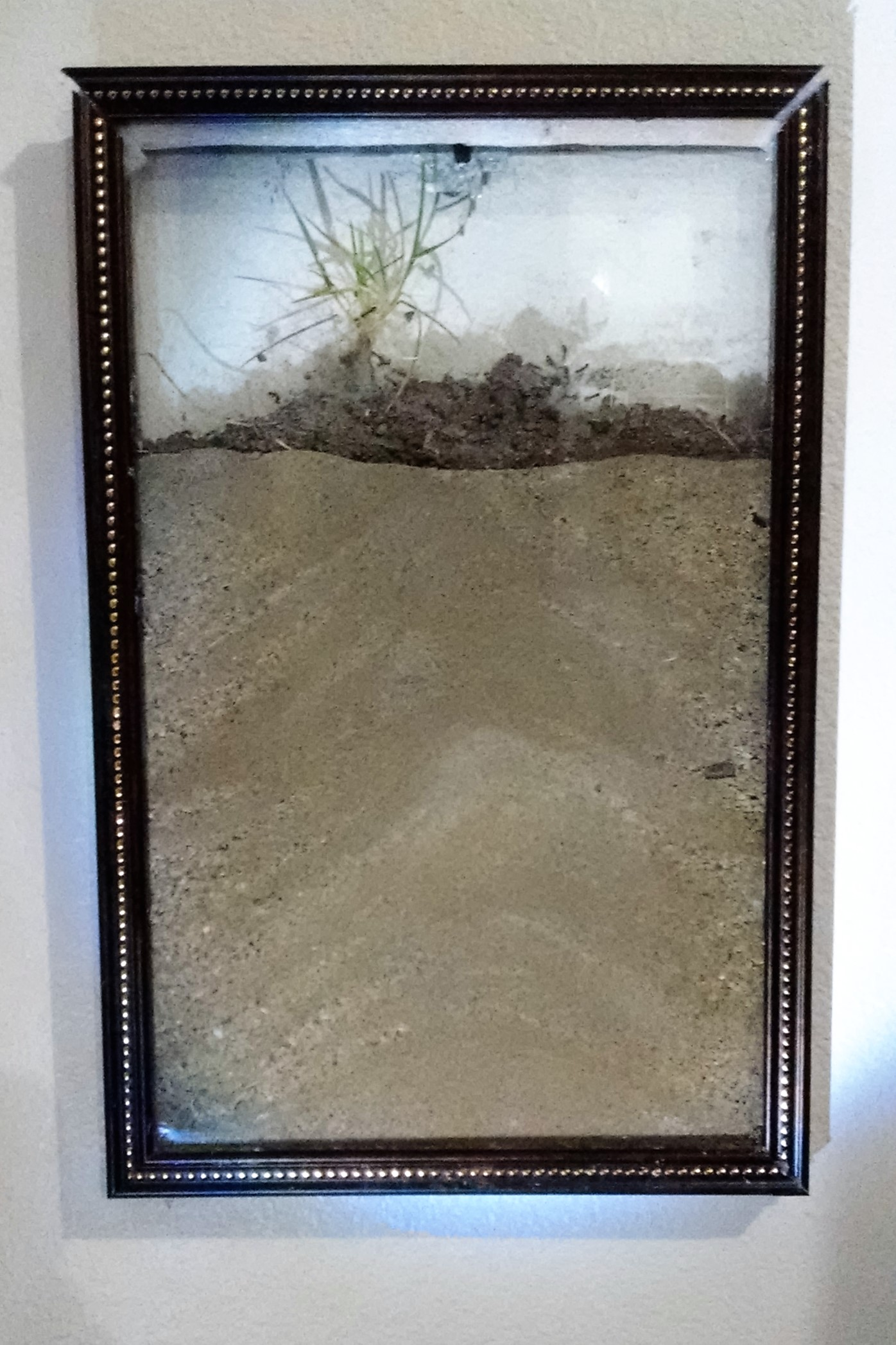 Picture of Artwork Ant Farm