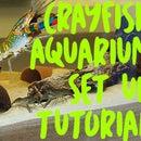 Crayfish Aquarium Set Up