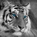 Merk the Tiger