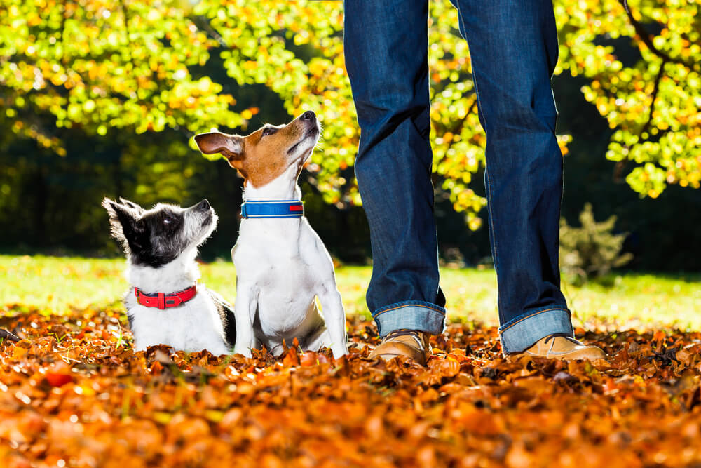 Picture of Dog Training Easy Tips and Commands