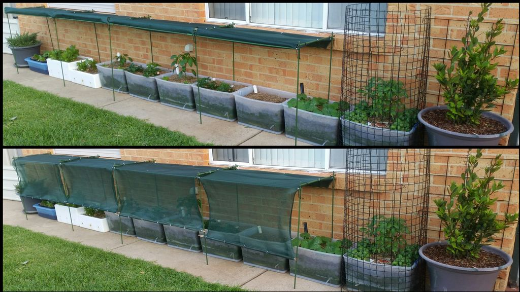 Picture of Update to the Plastic-tub Garden