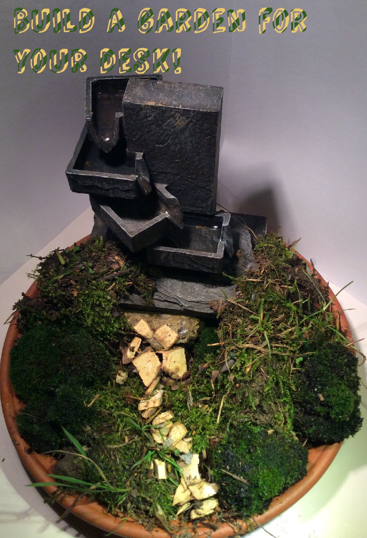 Picture of Miniature Garden on Your Desk.