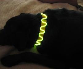 El Wire Dog Collar & Leash!