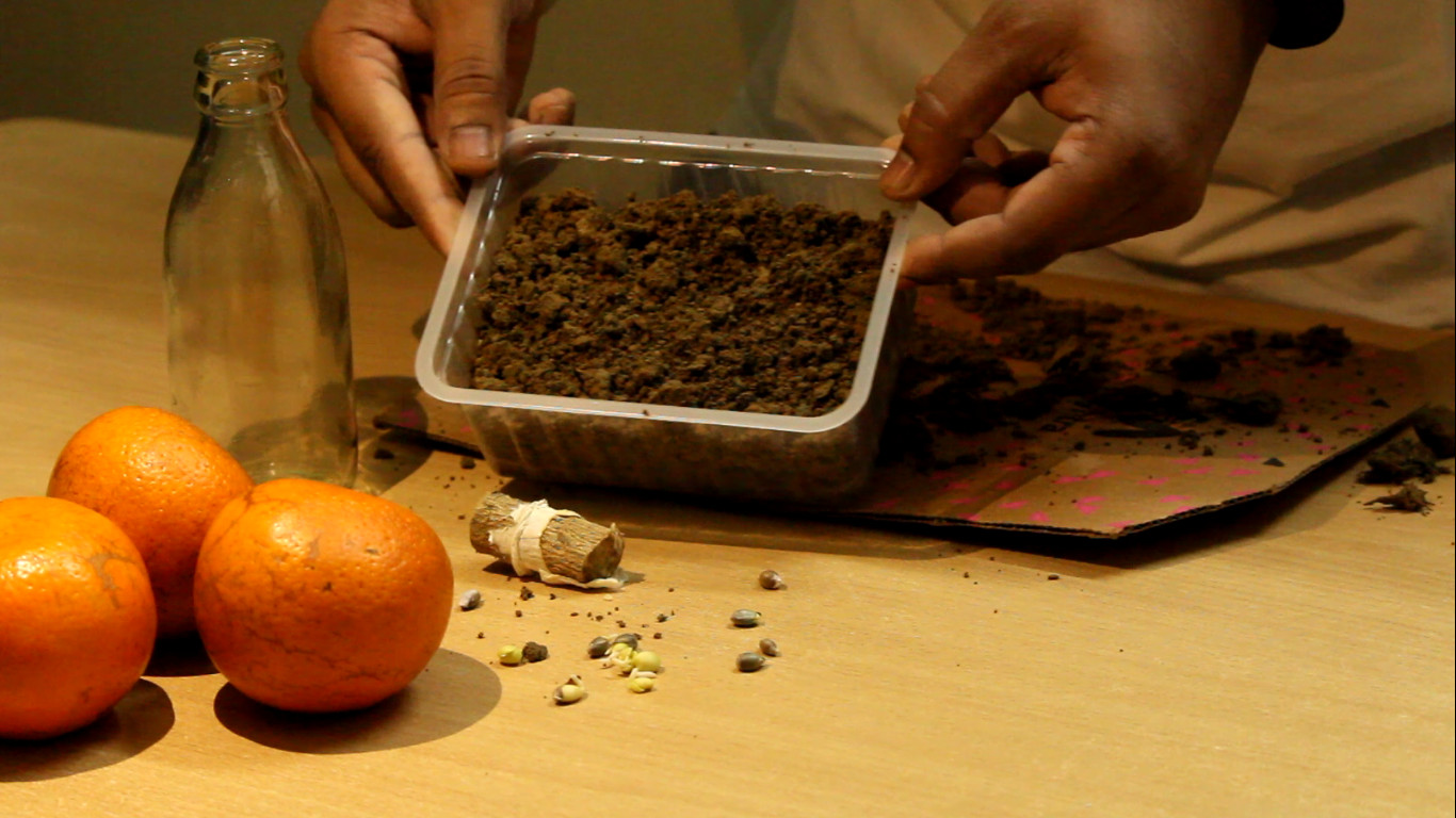 Picture of Seeds in Container