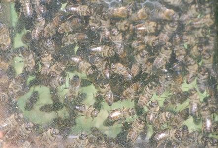 Computer Case Beehive