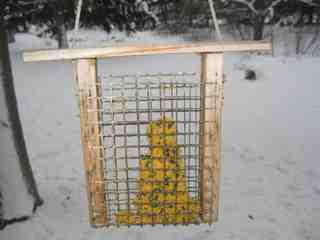 Picture of Bird Cake Feeder...Tools and Materials