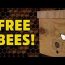 Build a Honey Bee Bait Hive