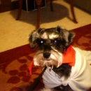 Little Super Dog
