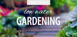 Low Water Gardening Challenge 2016