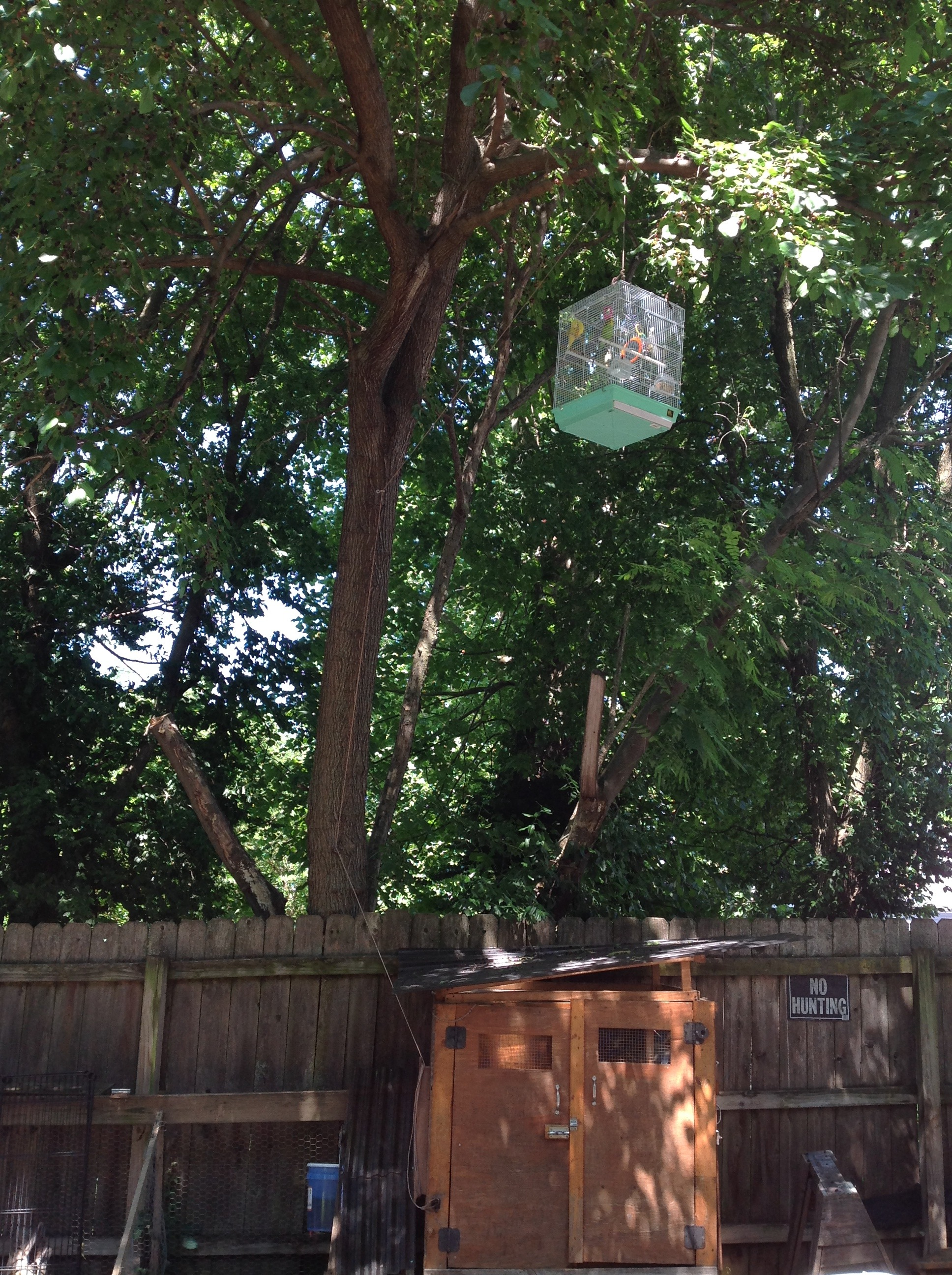 Picture of Parakeet Retreat
