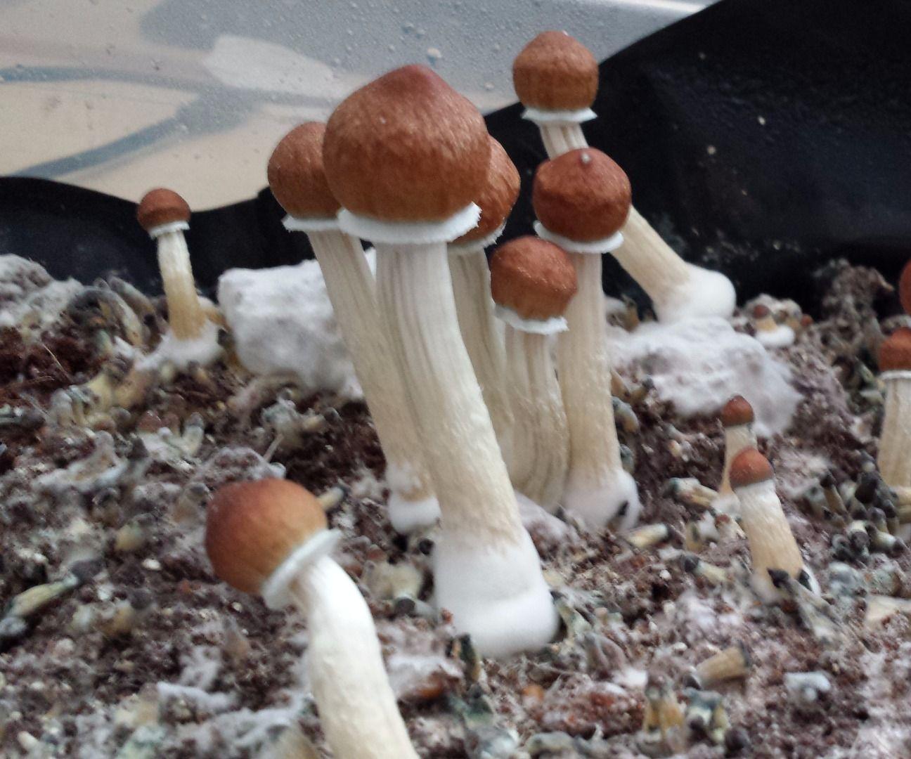 Beginner's Guide to Growing Mushrooms: 10 Steps