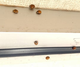 Ladybug Prevention
