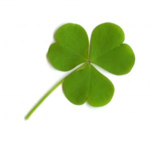 Picture of What a Shamrock Looks Like