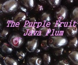 The Purple Fruit-Java Plum