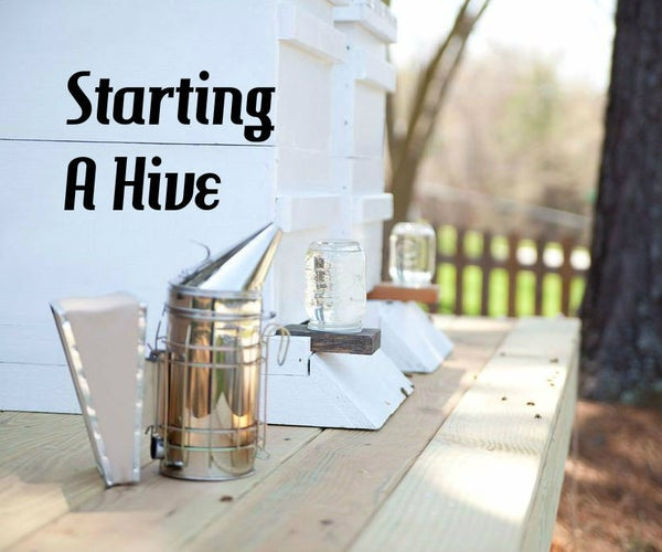 Start a Back Yard Honey Bee Hive
