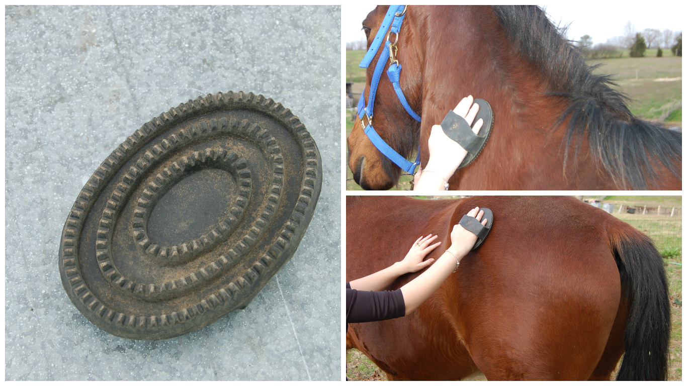 Picture of Use the Curry Comb to Loosen Excess Dirt and Mud