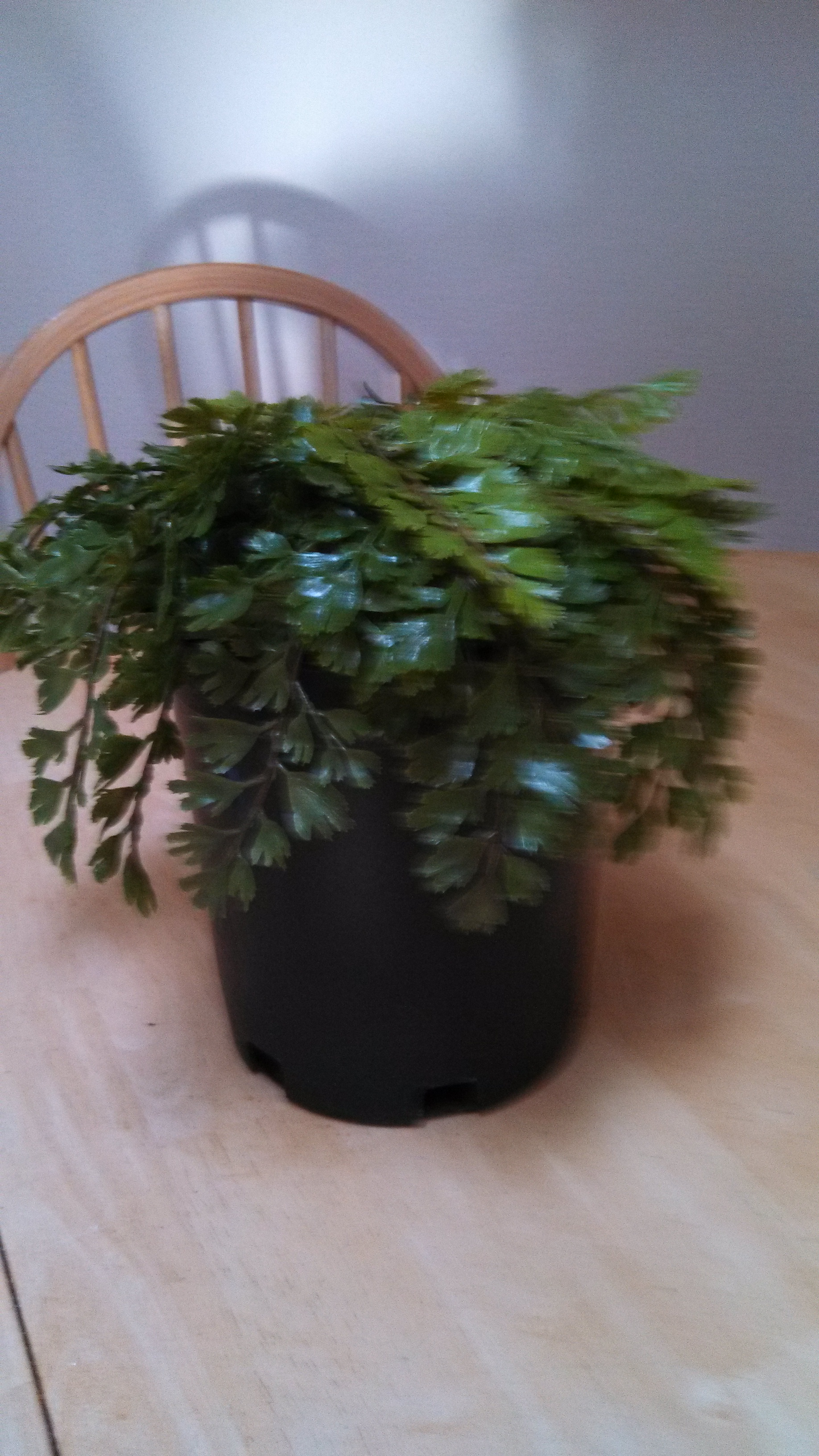 Picture of Plant Safe