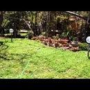 Motion Activated Sprinkler DIY