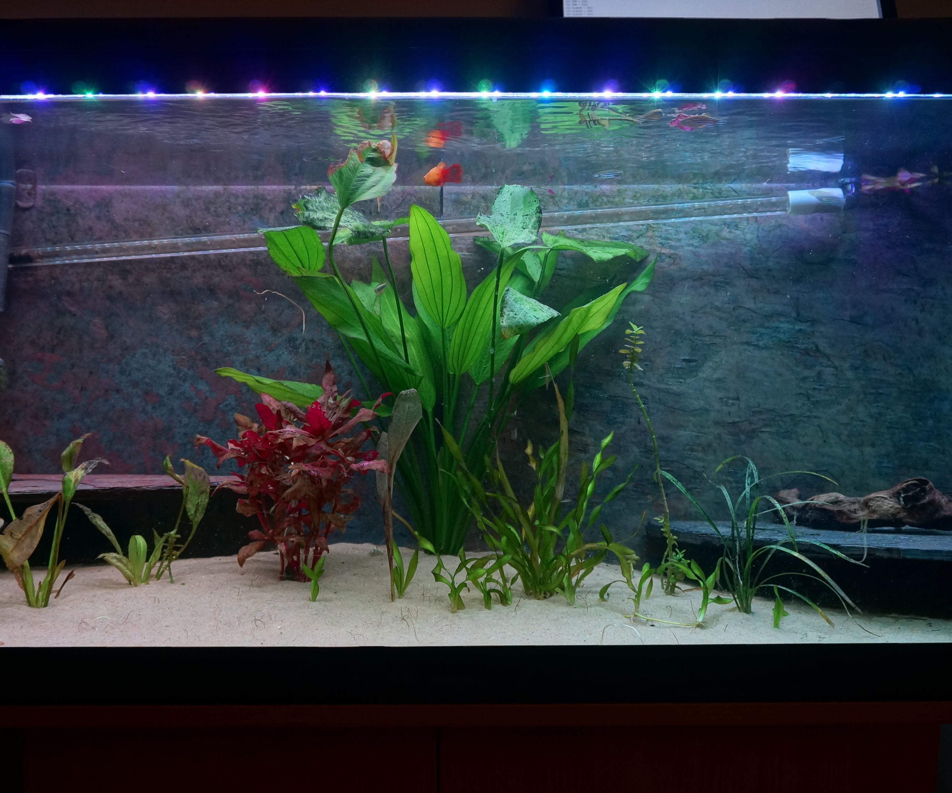 Mario Brothers Aquarium Decorations Home Aquarium Featured Instructables